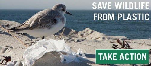 Save-Marine-Wildlife-From-Plastic